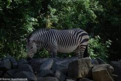 Zoo-12