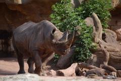Zoo-14