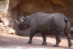 Zoo-15
