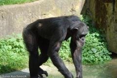 Zoo-19