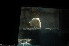 Zoo-24
